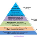 THE 5 BASIC HUMAN NEEDS